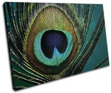 Peacock Feathers  Animals - 13-0749(00B)-SG32-LO